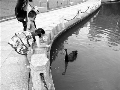 上海盗吃徐家汇公园黑天鹅案宣判
